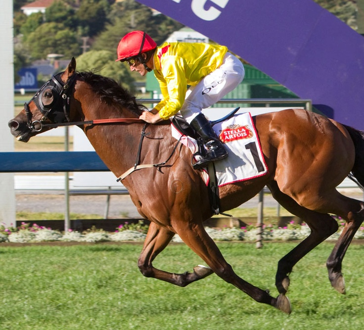 Zavite wins the Auckland Cup 2010
