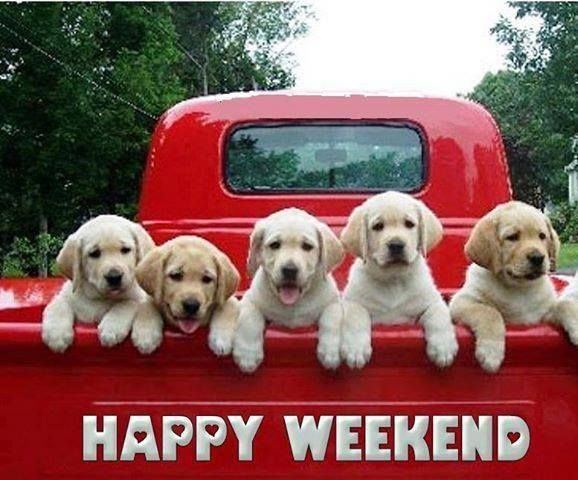 Puppies in a truck. Happy weekend. #dogs