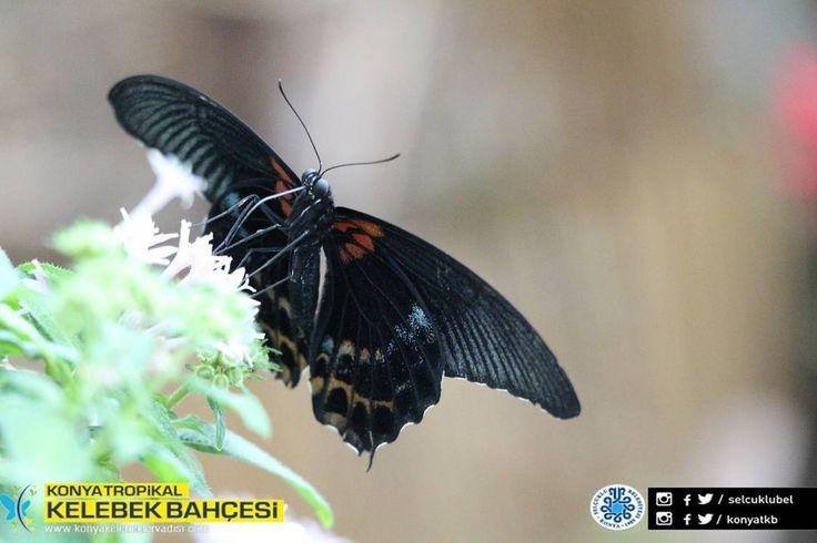 #konya #selçuklu #türkiye #tropikal #kelebek #bahçe #butterfly #flowers #botanical #photo #travel #tourism #tourist #mevlana #bununadiask #sebiarus #kelebeklervadisi #konyatropikalkelebekbahçesi http://turkrazzi.com/ipost/1524722890623521602/?code=BUo52QEhZNC
