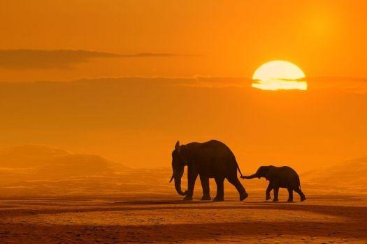 Imagenes de elefantes: foto elefante con su cria bebe  [10-10-15]