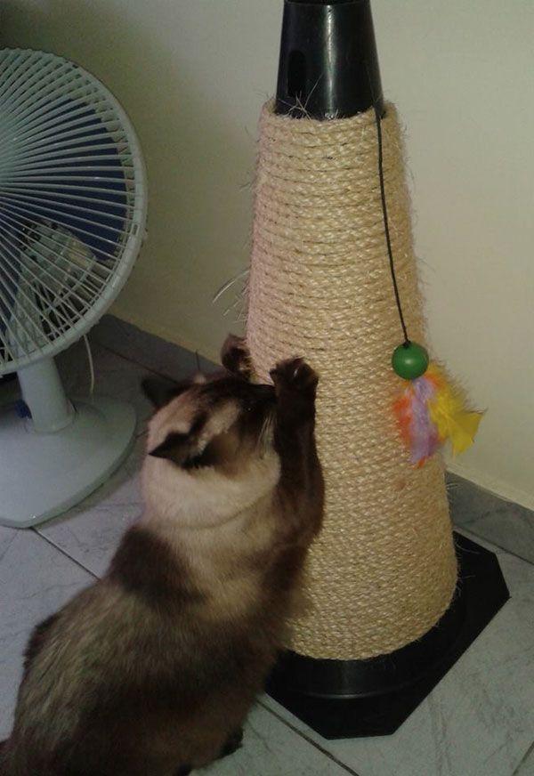 Lembra destearranhador para gatos? A leitora Angela Dias e o seu namorado fizeram um parecido. Dá uma olhada: Ela fez o arranhador para gatos com uma base de madeira de palet forrada com um plástico que imita madeira. Ela também pegou um tronco de árvore, enrolou corda de sisal nele e o fixou na base …