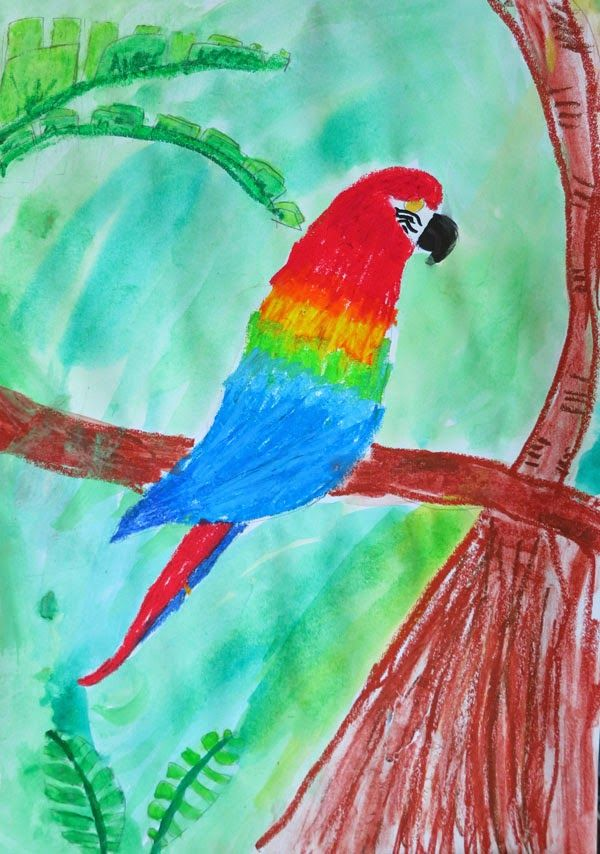 Meg (age 11) painted this lovely macaw.