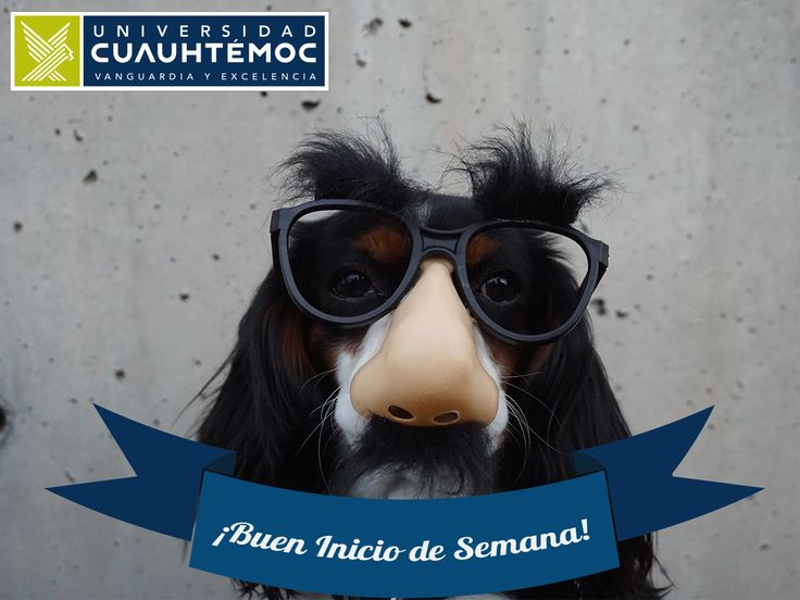 ¡Inscríbete a Universidad Cuauhtémoc y empieza tu carrera! Conoce nuestro plan de estudios de la Licenciatura de #Veterinaria y Zootecnia. http://www.ucg.edu.mx/medicina-veterinaria-y-zootecnia #perro #animales