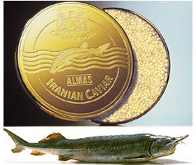 Almas Beluga is the world's most expensive Caviar   Luxurylaunches