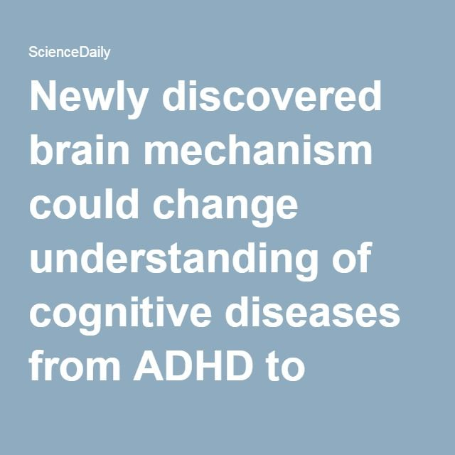 Newly discovered brain mechanism could change understanding of cognitive diseases from ADHD to autism -- ScienceDaily