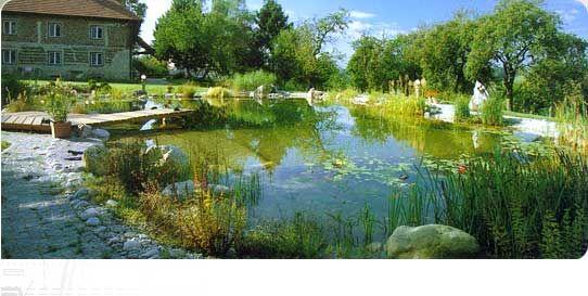 Natural swimming pool in australia dream swimming pools pinterest swim australia and pools for Natural swimming pools australia