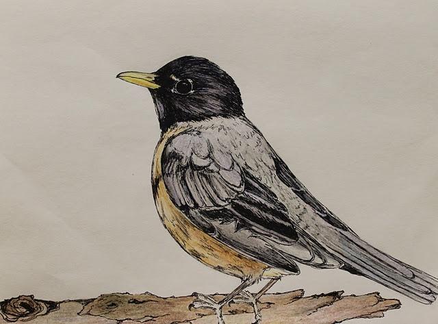robin drawing by maria farinola