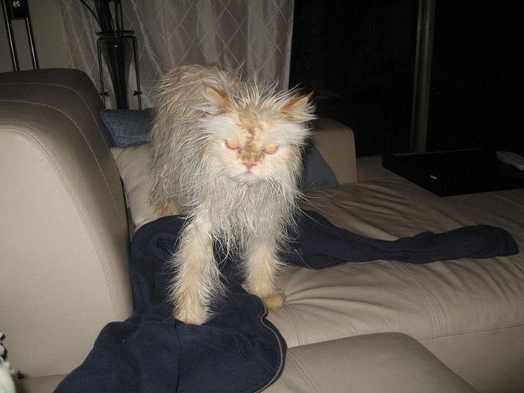 funny-wet-cats-10.jpg (880×660)