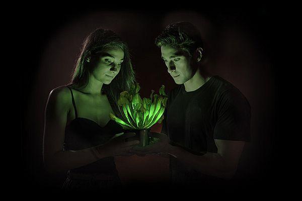 Biotechnologie: US-Forscher machen leuchtende Pflanzen marktreif - WiWo Green