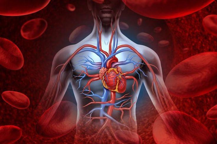 Výskum objavil spôsob, ako zachrániť poškodené srdce.