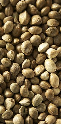 Hemp Seeds | 17 Ways To Add Protein To Your Smoothies Without Using Chemical Powders