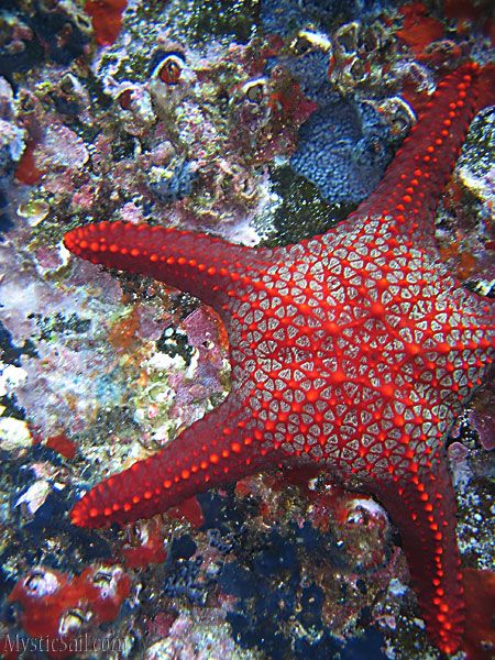 Very Unusual Looking Starfish  http://marinecarecenter.com/