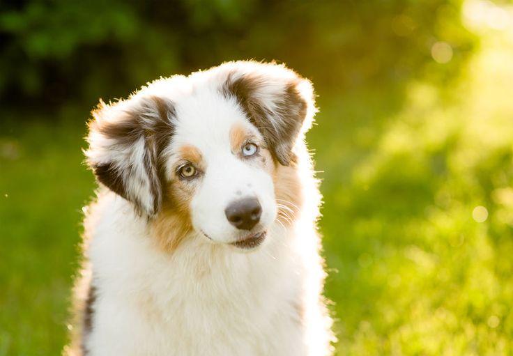 Wie wird mein Hund aufmerksamer – 12 Schritte!!! – Dogs Sunshine
