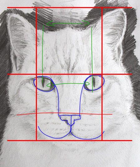 dessiner un chat en étudiant sa morphologie