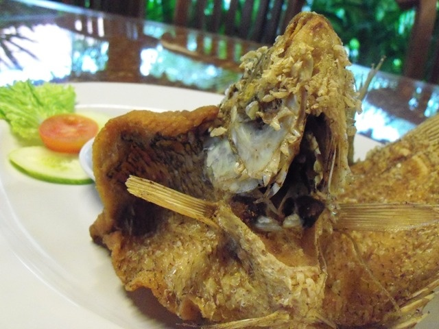 Gurame fish from Indonesia.