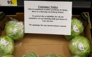 Sales of lettuce seeds soar in wake of shortage as shoppers try to protect themselves from further rationing
