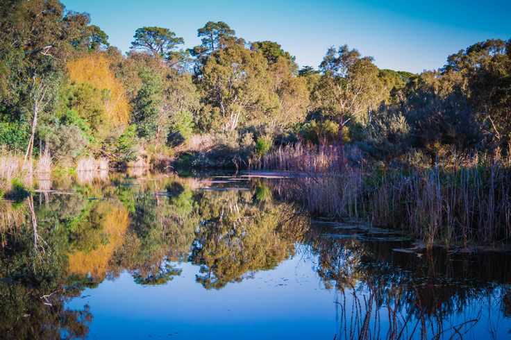 Reflection Infusion. Barwon River Walk, Fyansford, Victoria, Australia. The river injects a calm and then infuses a reflection, its an antidote to the madness that exists beyond. www.blueluminance.wordpress.com © Gary Light.  License: (CC BY-NC-ND 4.0)