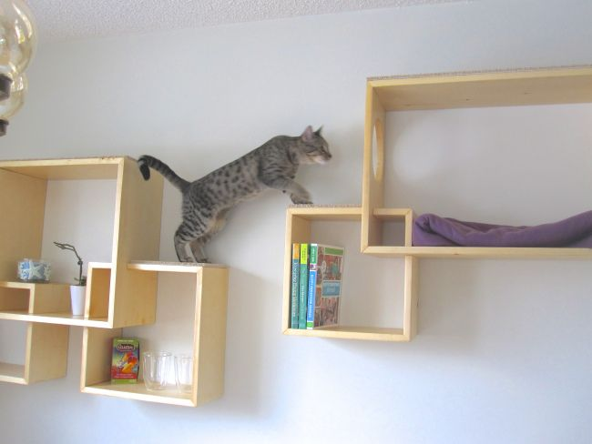 DYI Box Cat Shelves