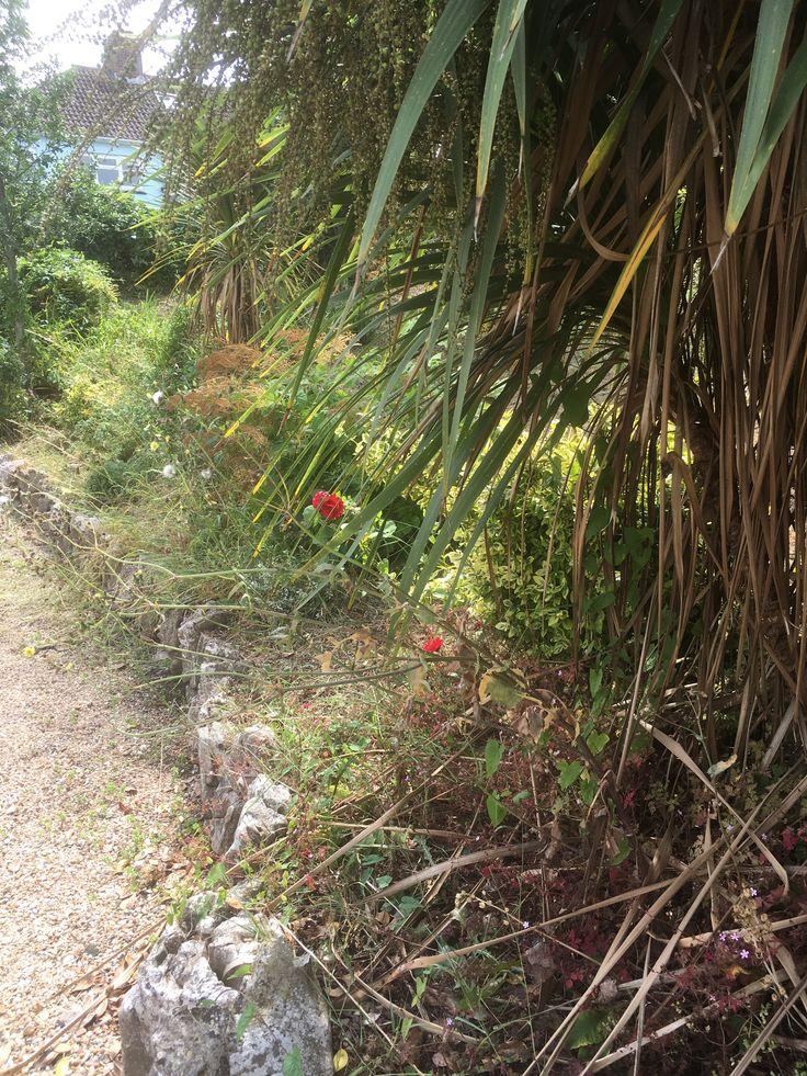Overgrown war memorial border.