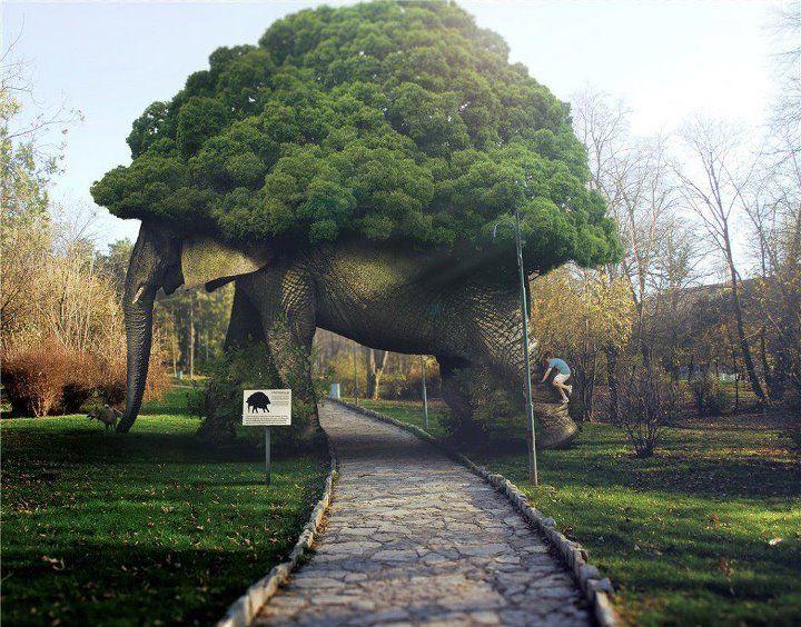 Tassels   Elephant Tree Arch Garden Folly