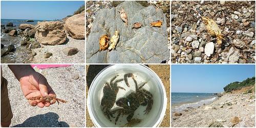 Collecting crabs in Alexandroupolis, Evros