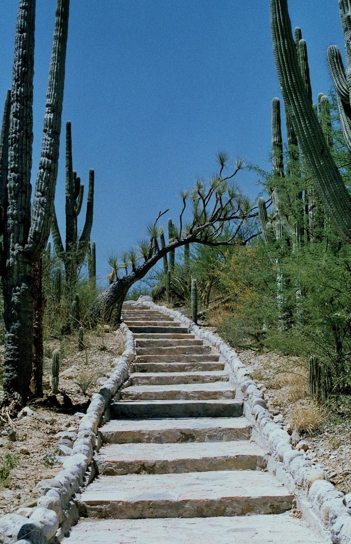 134 best gorgeous gardens images on pinterest botanical gardens