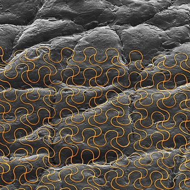 Wearable Electronic Sensors Can Now Be Printed Directly on the Skin   MIT Technology Review