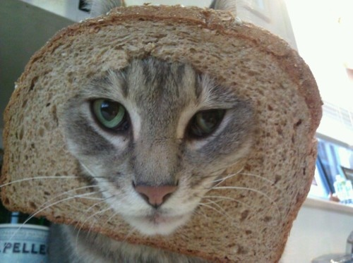 Cat In A Bread Box 350 Best Cat Breading Images On Pinterest  Breads Bread And