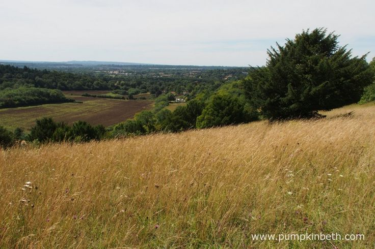 Pewley Down Nature Reserve in Guildord is a lovely place at any time of year, it's a wonderful place to see butterflies.