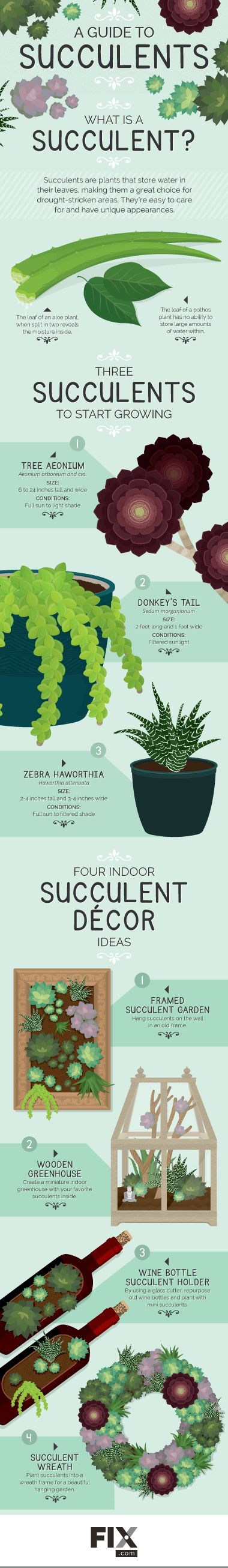 Succulents are beautiful to look at and easy to tend to. Read our guide to growing and caring for succulent plants.