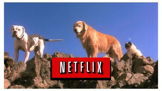 If you are looking for a great family movie to watch in April, check out Homeward Bound, available on Netflix April 15th. A great flick for the whole family