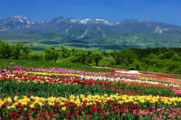 那須高原ロングライド2012では、コース別に特典をご用意しています。 那須高原コ...