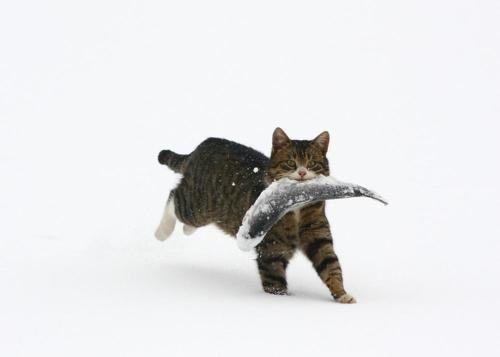 冬でも獲物をとってきた、、、