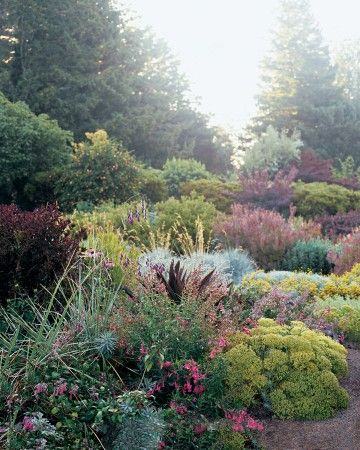 "Contrasting Foliage - Mary Reid wove burgundy plants, including Eucomis comosa ""Sparkling Burgundy,"" Weigela florida ""Wine and Roses,"" Leucadendron salignum ""Summer Red,"" Echinacea purpurea ""Bravado,"" and Penstemon ""Hidcote Pink,"" through a cluster of yellow-green euphorbia, santolina, and silver grasses."