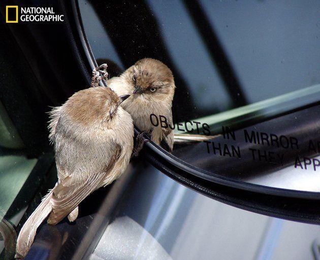 hehehe cutee: Photos, Mirror Mirror, Funny Animal Pics, Courtesi Tony, National Geographic, Tony Britton, Animal Gracioso, Birds, Captions Courtesi