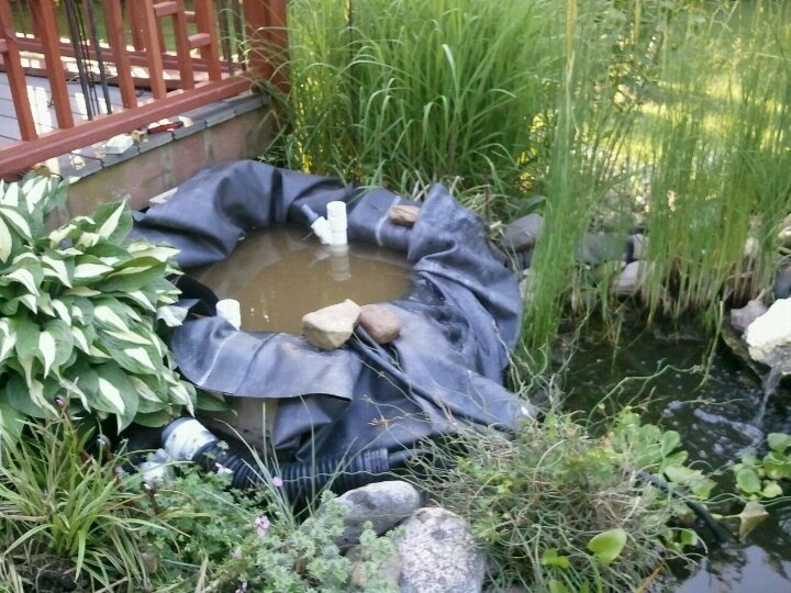 1000 images about water gardening and pond ideas on for Pond plant filter