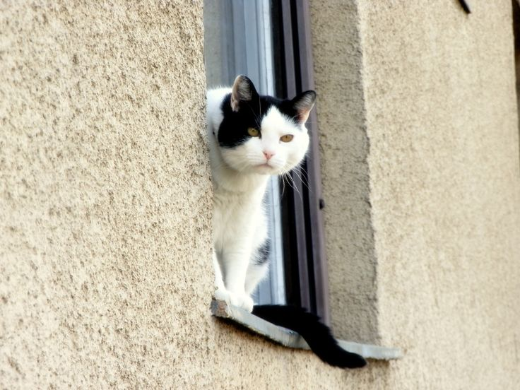 Cute cat watching from the ledge. #cat #cutecat