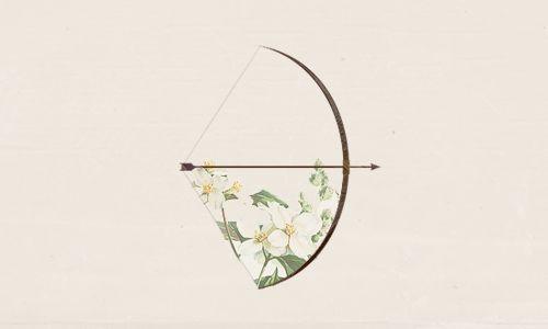 flowers, arrow, and bow