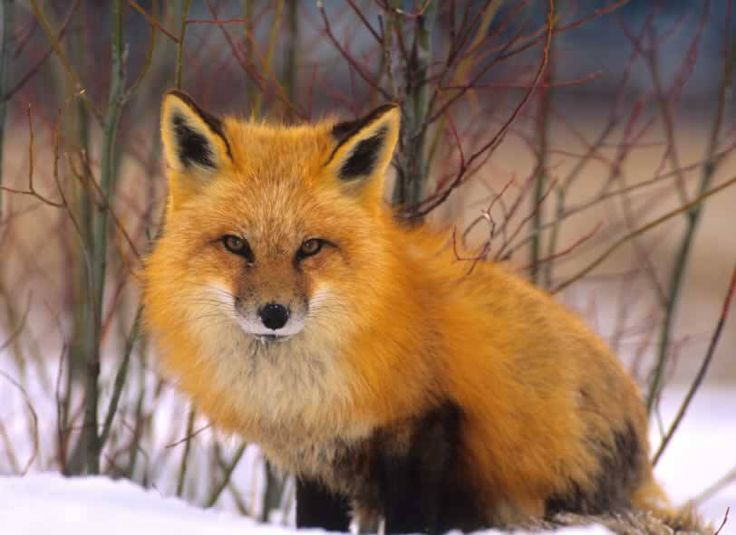 It's official: INTERMIX bans fur. Meaning that all brands under the Gap Inc. umbrella have banned fur, which is great news for animals.