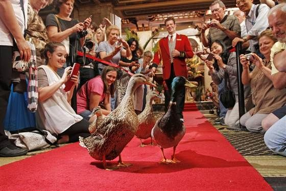 """""""You do what for a living? 7 strange hotel jobs"""" Featuring The Peabody Duckmaster"""