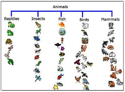 17 Best ideas about Animal Classification on Pinterest | Animal ...