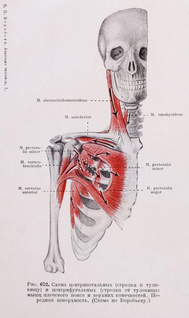 8 best #анатомия@artisthunt_reference images on Pinterest ...