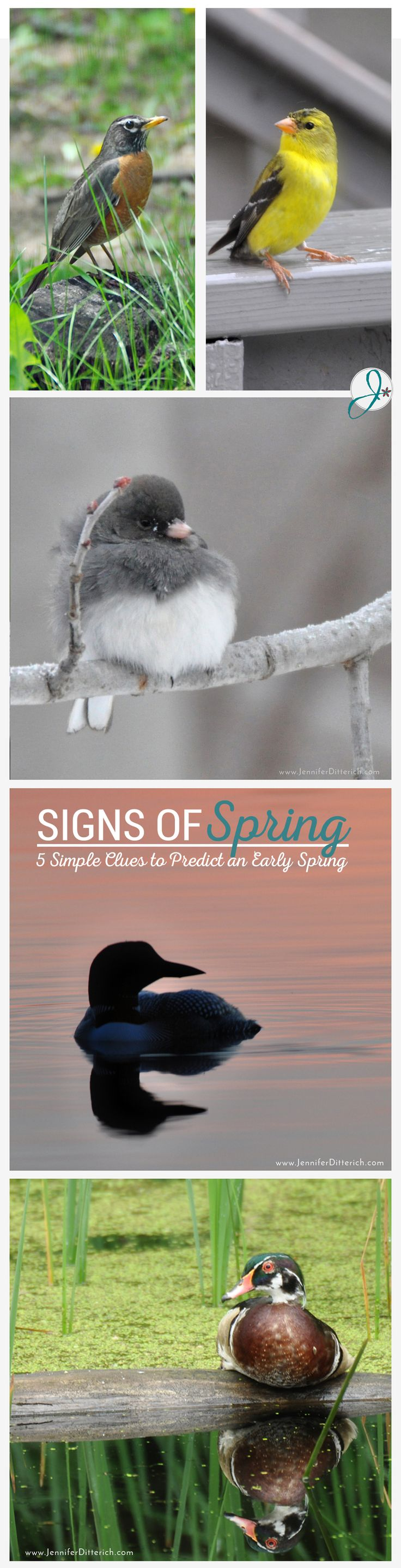 Signs of Spring | Read nature's clues to see if spring is arriving early this year.