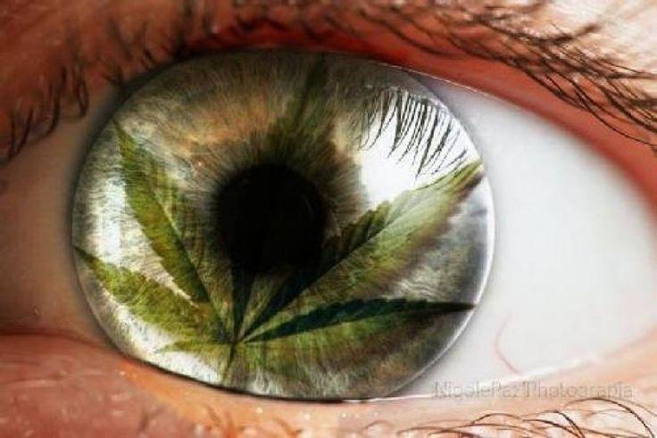 DROGAS NO, GRACIAS (DNG): ALTERACIONES POR EL CONSUMO DE MARIHUANA:.