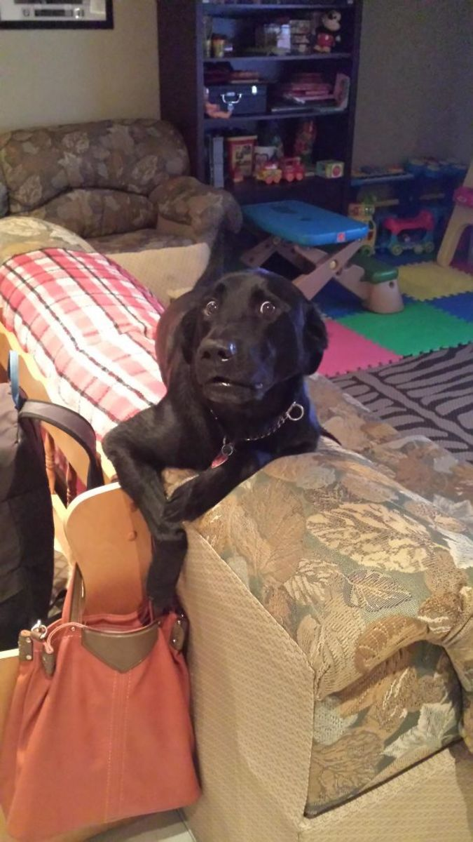 Best Pets Images On Pinterest - 23 hilarious photos of pets caught red handed