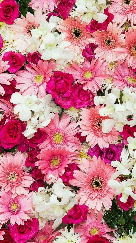 Ghada Moustafa さんのボード Flowers 花 壁紙 蜷川 実花 壁紙