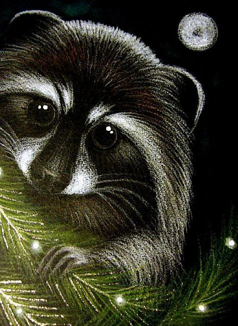 Animal Kingdom Colouring Raccoon : 365 best coloring books images on pinterest