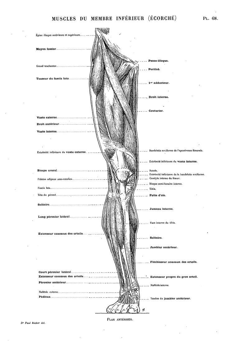 96 best A-2.5 - LEG ANATOMY images on Pinterest   Health fitness ...