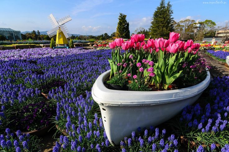 Ogród, Tulipany, Szafirki, Wiatrak, Drzewa