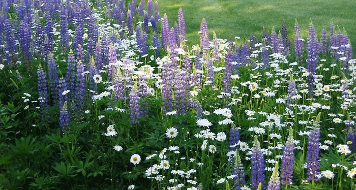 Great information on how to plant and care for a wildflower garden.